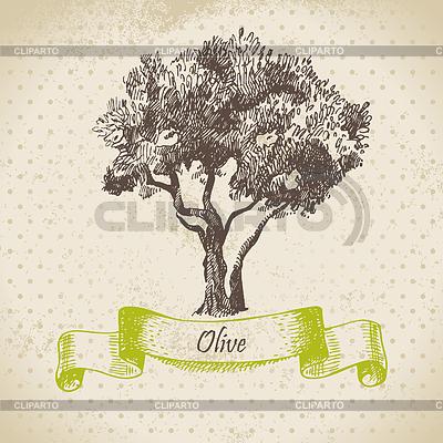 Оливковое дерево рисунок