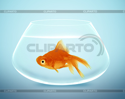 Goldfische im Schälchen | Foto mit hoher Auflösung |ID 3524169