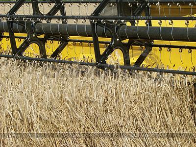 Wheat field harvesting with agricultural machinery | Foto stockowe wysokiej rozdzielczości |ID 3574743