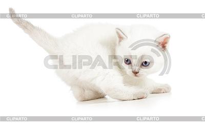 Aktive kitten - einen Monat alt | Foto mit hoher Auflösung |ID 3657086