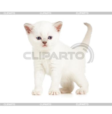 British kitten | Foto mit hoher Auflösung |ID 3657089