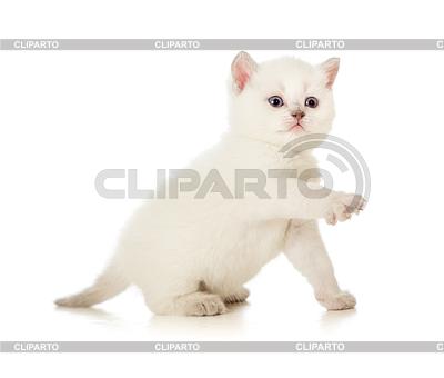 Britische Baby Katze mit erhobenem paw | Foto mit hoher Auflösung |ID 3657099