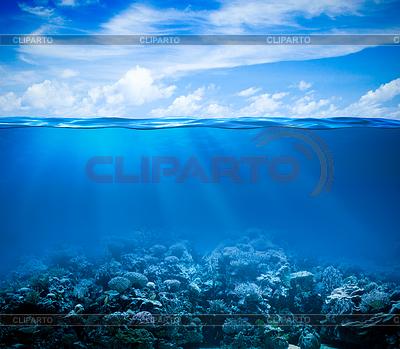 Подводные коралловые рифы морского