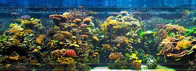 Großes Aquarium Panorama | Foto mit hoher Auflösung |ID 3658851