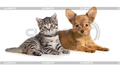 Welpen und Kätzchen liegend zusammen. Katze und Hund | Foto mit hoher Auflösung |ID 3659004