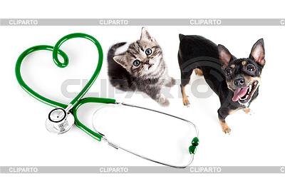 Veterinary für Katzen, Hunde und andere Haustiere Konzept | Foto mit hoher Auflösung |ID 3659095