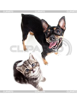 강아지와 고양이의 상위 뷰 | 높은 해상도 사진 |ID 3659096