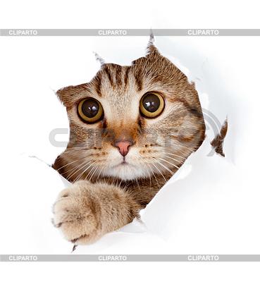 Kot patrząc w stronę papieru otwór podarte | Foto stockowe wysokiej rozdzielczości |ID 3659678