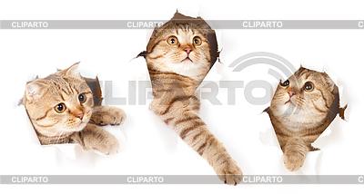 Zestaw jeden kot w bocznej rozdartym papierze otworu | Foto stockowe wysokiej rozdzielczości |ID 3659859