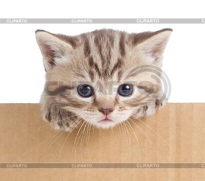 Kleines Kätzchen im Karton | Foto mit hoher Auflösung |ID 3660608