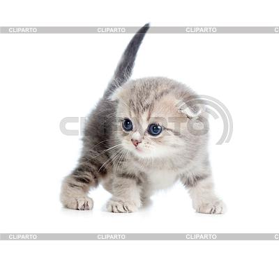 Baby Katze einen Monat alt | Foto mit hoher Auflösung |ID 3660949