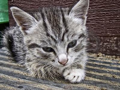 Szare paski kotek | Foto stockowe wysokiej rozdzielczości |ID 4587083